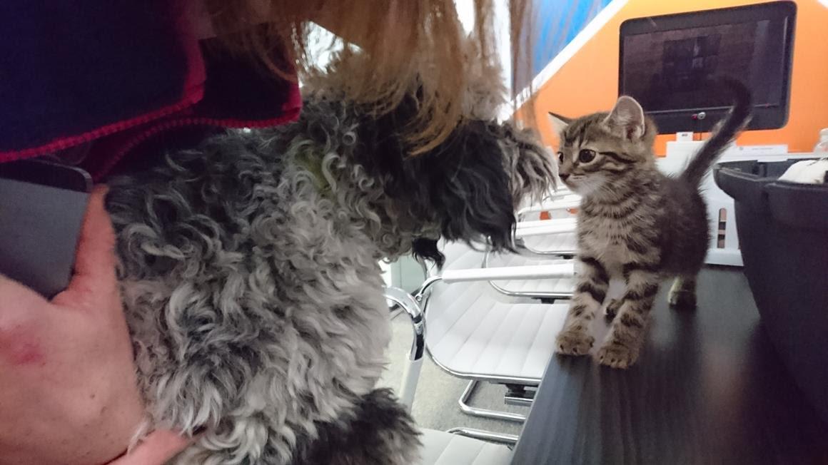 cat_v_dog
