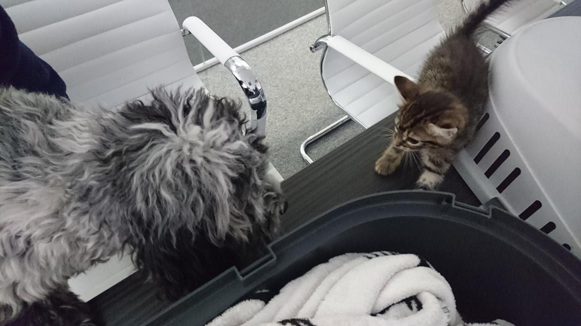 cat_v_dog2