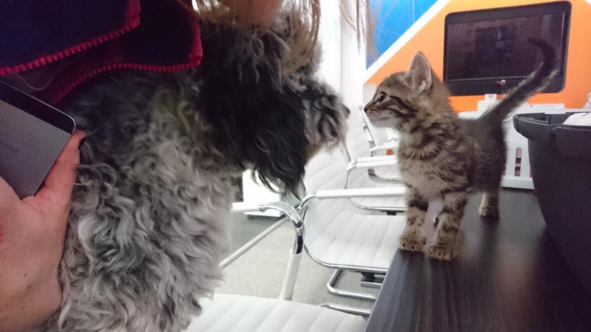 cat_v_dog3